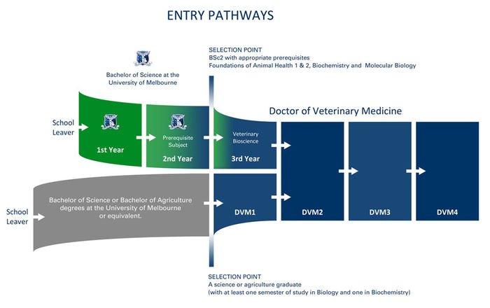 DVM Pathways diagram